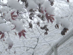 06_0121_snow01.jpg