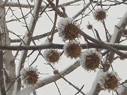 06_0121_snow03.jpg