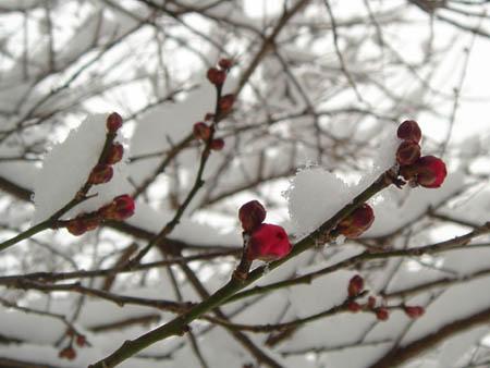 06_0121_snow05.jpg
