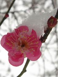06_0121_snow06.jpg