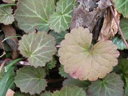 06_0307_leaf1.jpg
