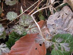 06_0307_leaf2.jpg