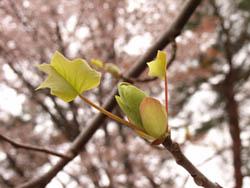 06_0414_yurinoki5.jpg