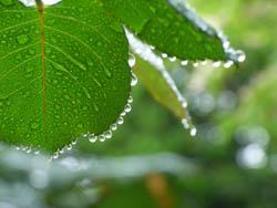 06_0511_raindrops1.jpg