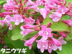 06_0526_hakone_u3.jpg