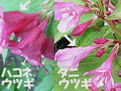 06_0526_hakone_u4.jpg