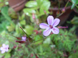 06_0529_garden1.jpg