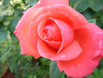 06_0529_garden4.jpg