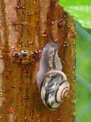 06_0613_snailes03.jpg