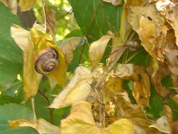 06_0613_snailes10.jpg