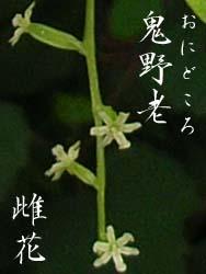 06_0722_onidokoro5.jpg