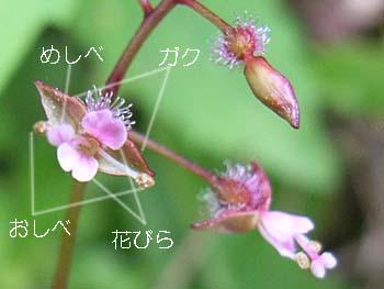06_0831_tanitade03.jpg