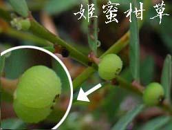 06_0926_h_mikanso3.jpg