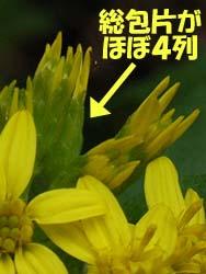 06_1023_akinoki5.jpg