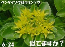 06_1023_akinoki6.jpg