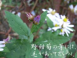 06_1106_nokon02.jpg