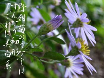 06_1106_nokon04.jpg