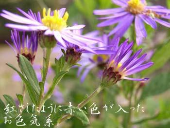 06_1106_nokon05.jpg