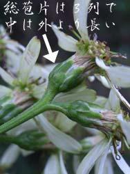 06_1106_sirayama2.jpg