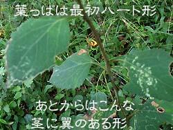 06_1106_sirayama3.jpg
