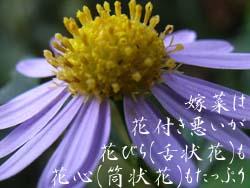 06_1107_k_yomena03.jpg