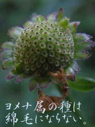 06_1107_k_yomena05.jpg