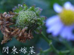 06_1109_k_yomena2.jpg