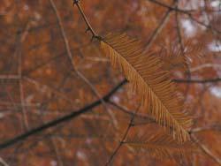 06_1226m_sequoia.jpg