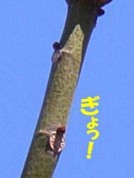 07_0125_aogiri8.jpg