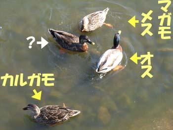 07_0208_nanigamo.jpg