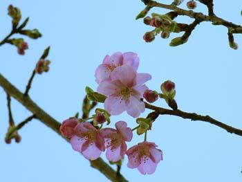 07_0214_kawazu4.jpg