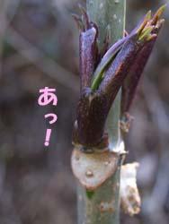 07_0221_niwatoko3.jpg