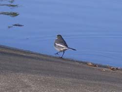 07_0228_littlebirds01.jpg