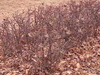07_0228_littlebirds02.jpg