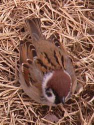 07_0228_littlebirds03.jpg