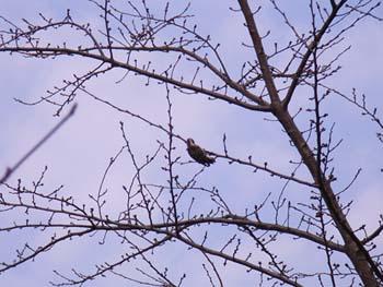 07_0228_littlebirds04.jpg
