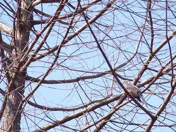 07_0228_littlebirds07.jpg