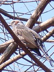 07_0228_littlebirds08.jpg