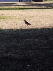 07_0228_littlebirds10.jpg