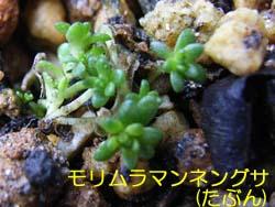07_0306_morimura_m.jpg