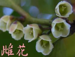 07_0308_hisakaki5.jpg