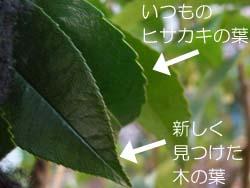 07_0308_hisakaki8.jpg
