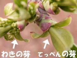 07_0311_mayumi3.jpg