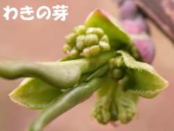 07_0311_mayumi4.jpg