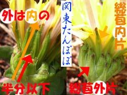 07_0421_tanpopo3.jpg
