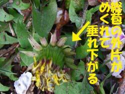 07_0421_tanpopo7.jpg