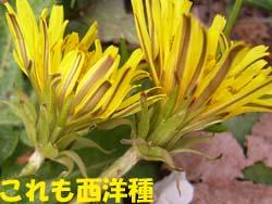07_0421_tanpopo8.jpg