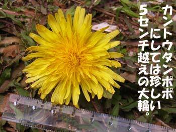 07_0422_tanpopo7.jpg