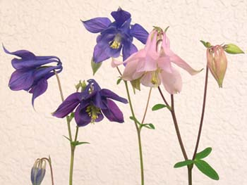 07_0501_s_odamaki2_.jpg