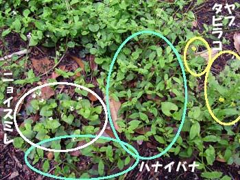 07_0513_gunraku.jpg